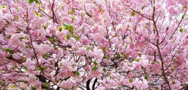 Milosc Na Marginesie Yoko Ogawa Recenzja Zazyjkultury
