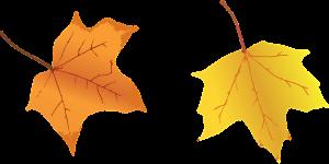 leaves-1634105_960_720